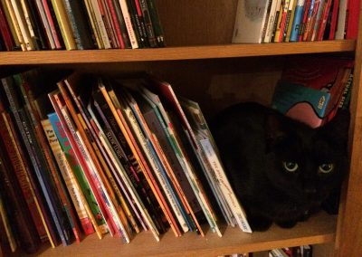Raffy the book-loving cat again